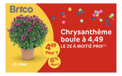 Offre spéciale sur les chrysanthèmes boules